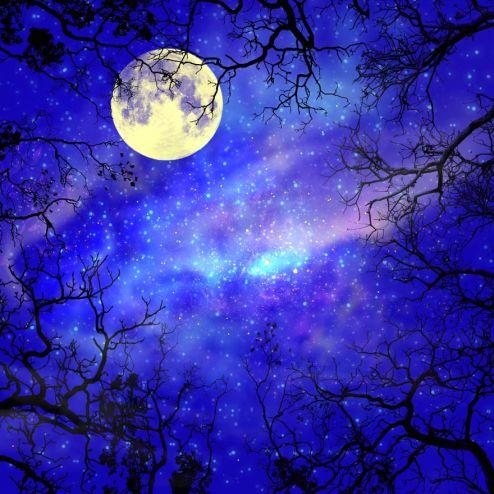 обои на потолок Фотообои луна на небе в лесу