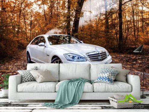 Фотообои Транспорт по выгодной цене Фотообои белая машина в лесу