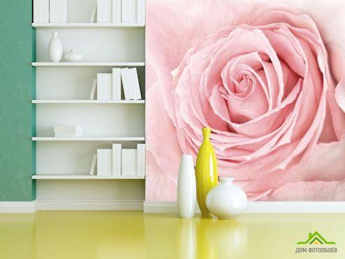 обои Розы Фотообои розовая роза