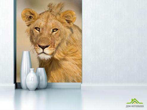 обои Животные Фотообои Мечтающая львица
