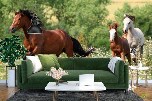 Лошади Фотообои Лошади на лугу