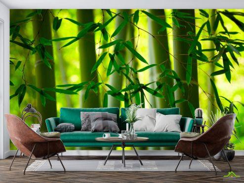 Фотообои Природа по выгодной цене Фотообои Бамбук и листочки