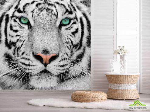 обои Животные Фотообои Красавец тигр