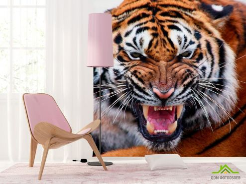 обои Тигры Фотообои Грозный оскал тигра