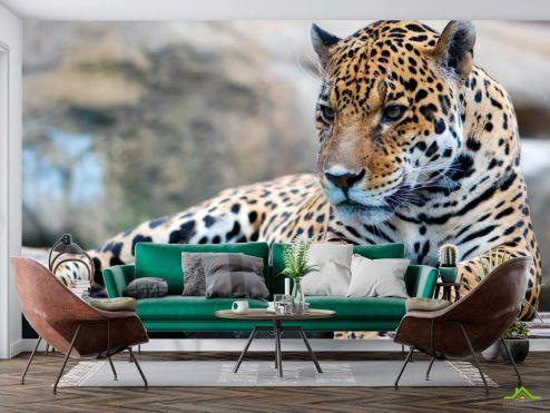 Животные Фотообои Гепард на отдыхе