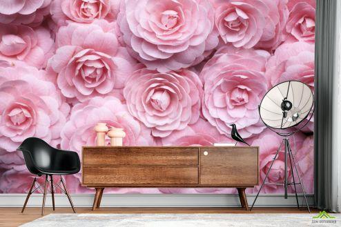 Розы Фотообои широкие розы