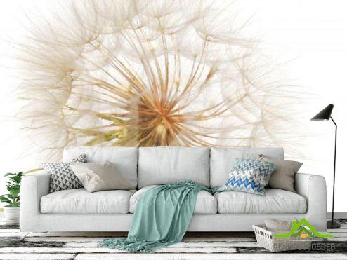 обои Цветы Фотообои одуванчик на бело фоне
