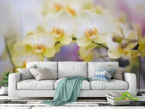Орхидеи Фотообои желтые орхидеи