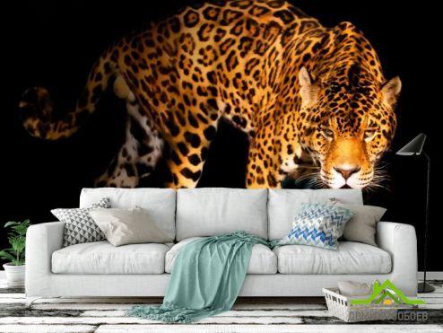 обои Гепарды Фотообои Нападающий гепард