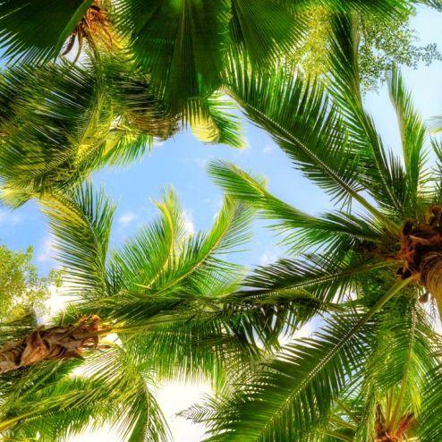 обои на потолок Фотообои под пальмами