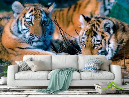 Тигры Фотообои Два тигра