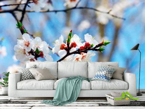 обои Цветы Фотообои Маленькие вишневые цветочки