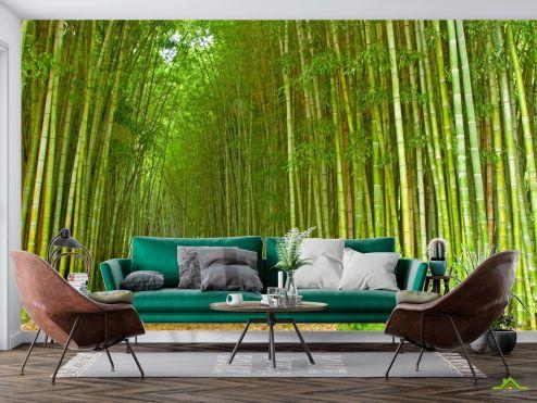 Природа Фотообои Много бамбука