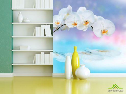 обои Орхидеи Фотообои Орхидея