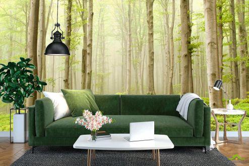 лес Фотообои Голые деревья