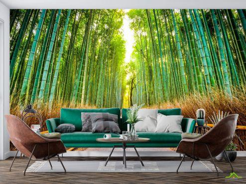 Расширяющие пространство Фотообои Бамбуковая роща