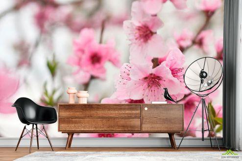 Вишня Фотообои Вишневые цветки весной