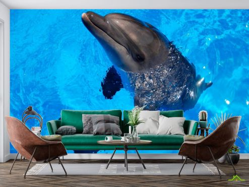 Дельфины Фотообои Резвый дельфин