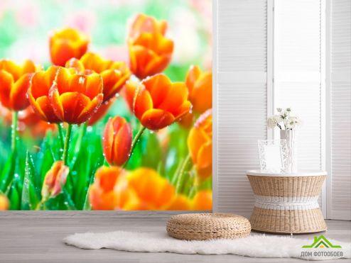 Тюльпаны Фотообои Красно-желтые тюльпаны купить