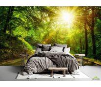 Фотообои Восход в лесу