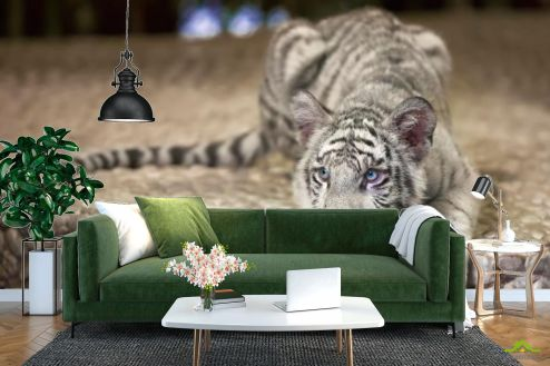 Тигры Фотообои Притаившийся тигр купить
