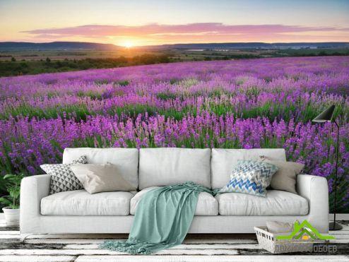 Природа Фотообои Лавандовое поле купить