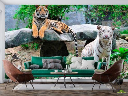 Животные Фотообои Любознательные тигры