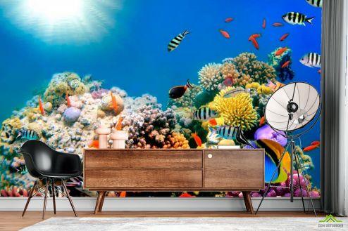 Рыбы и море Фотообои Рыбный косяк