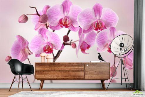 Орхидеи Фотообои сиреневые орхидеи из воды