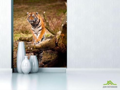 обои Животные Фотообои Удивленный тигр