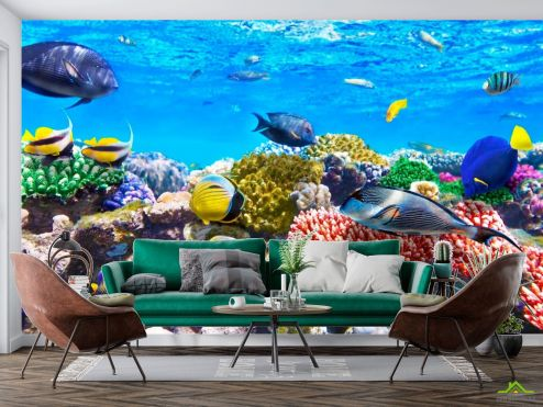 Рыбы и море Фотообои Рыбы