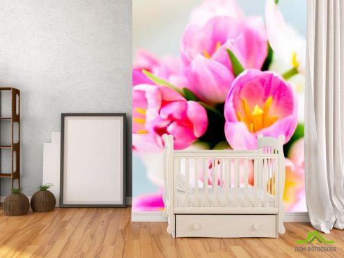 обои Цветы Фотообои Тюльпаны розовых тонов