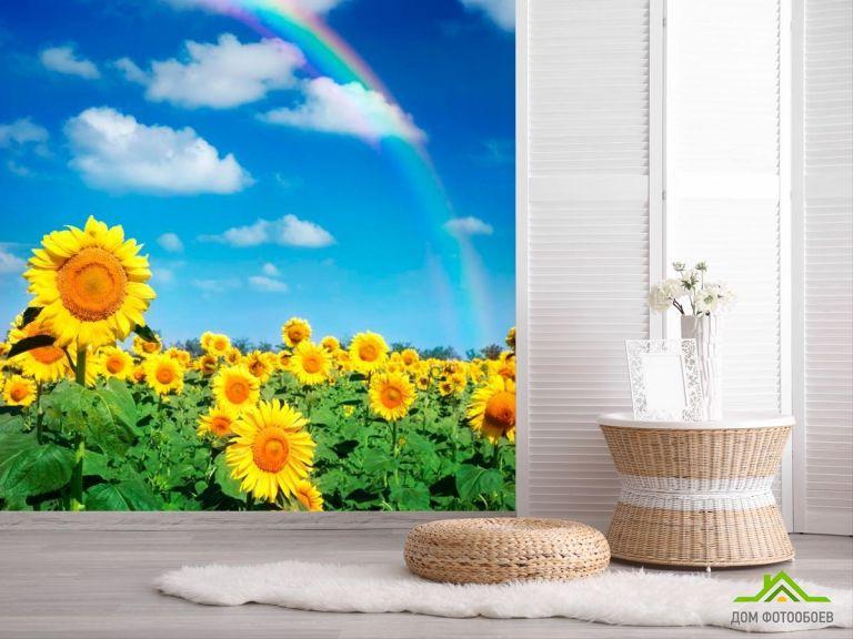 Фотообои Подсолнухи, радуга
