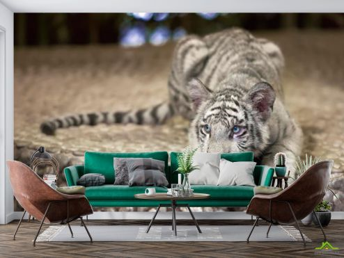 Тигры Фотообои Притаившийся тигр