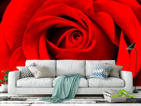 обои Цветы Фотообои Красная роза