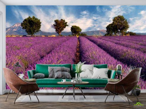 Фотообои Природа по выгодной цене Фотообои Поле цветов