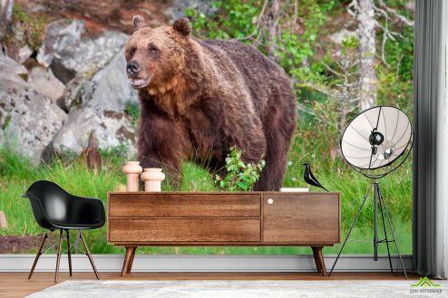 Медведи Фотообои Медведь в лесу