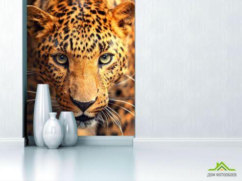 Оранжевые  Фотообои Любопытный гепард