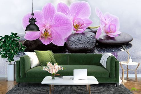 Орхидеи Фотообои орхидея на камне