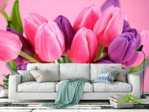 обои Цветы Фотообои Розовые и фиолетовые тюльпаны