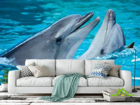 Дельфины Фотообои Нежность дельфинов купить