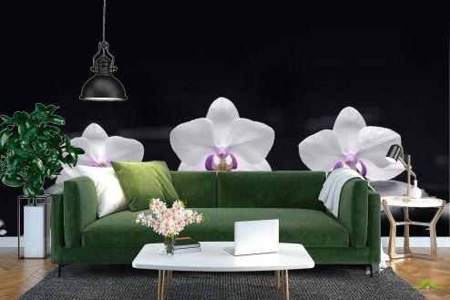 Орхидеи Фотообои белые орхидеи на черном фоне