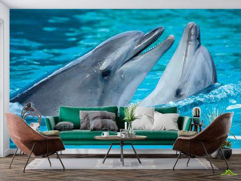 Животные Фотообои Нежность дельфинов купить