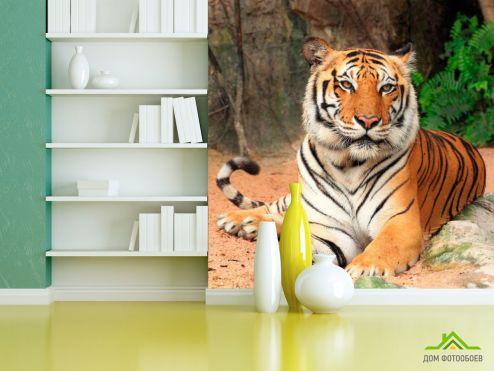 Тигры Фотообои Тигр на отдыхе
