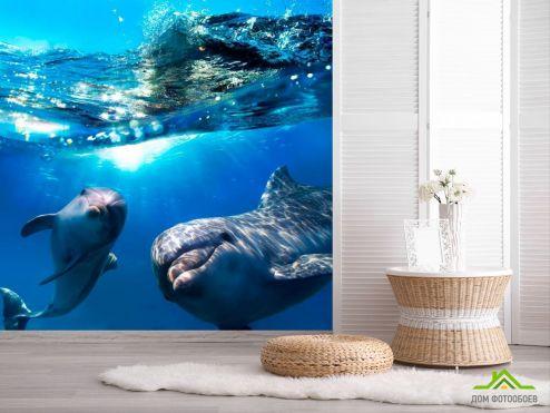 Дельфины Фотообои Неунывающие дельфины купить