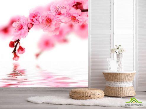 Цветы Фотообои Вишня в цвету