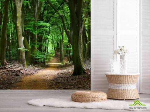 обои Природа Фотообои дорога в темном лесу