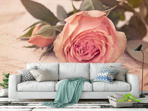 обои Цветы Фотообои Розы кремовые, бумага