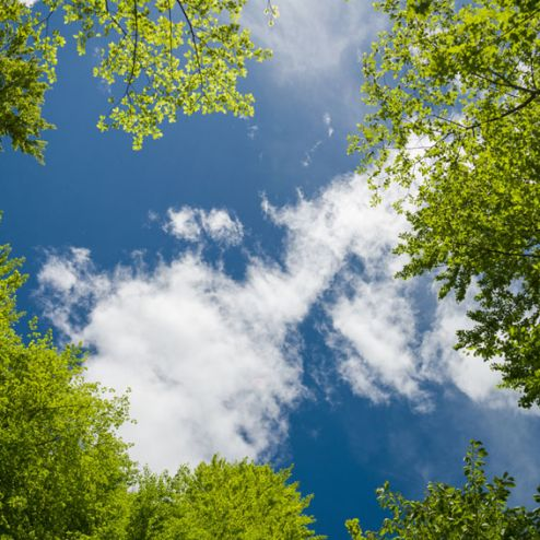 обои на потолок Фотообои Ветви и небо на потолок