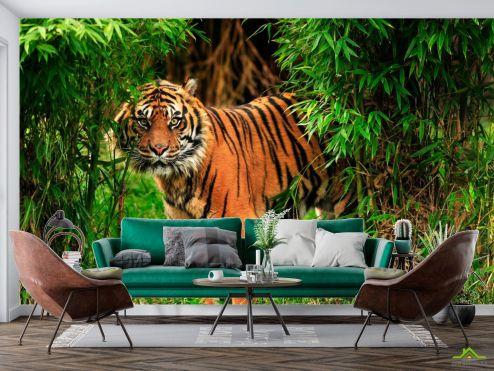 Тигры Фотообои Тигр в зарослях